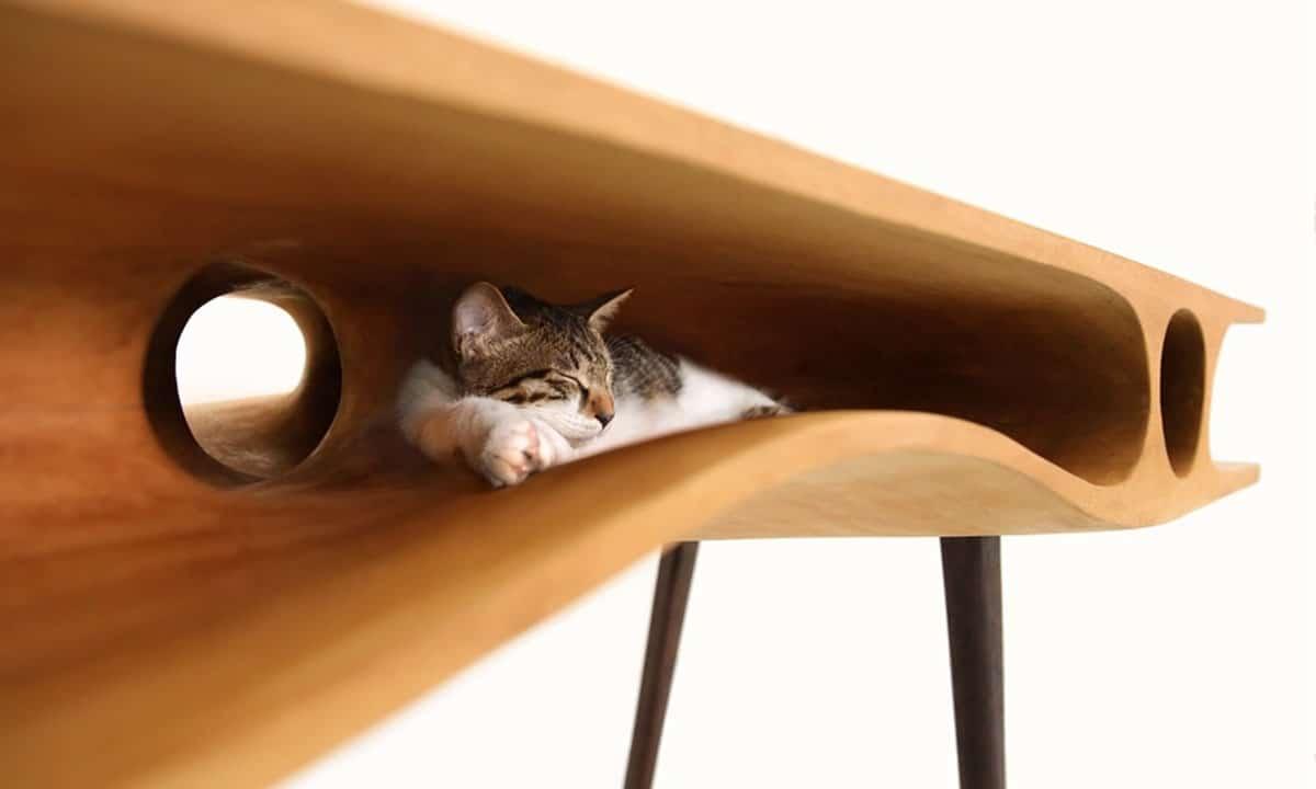 мебел за котки
